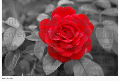 Watermark_imageresult